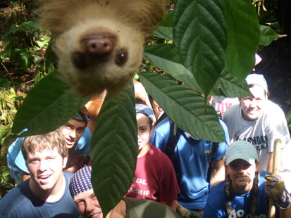 Sloth-Bombed